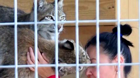 Video: Kam snimi? Veterinářka vytvořila domov pro zraněnou divokou zvěř