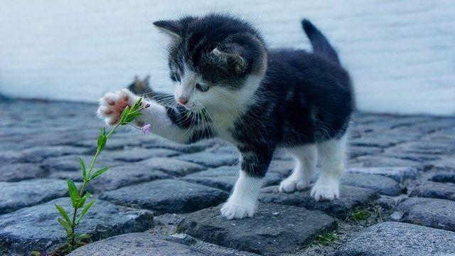 Klášterec nad Ohří řeší problémy spojené stoulavými kočkami
