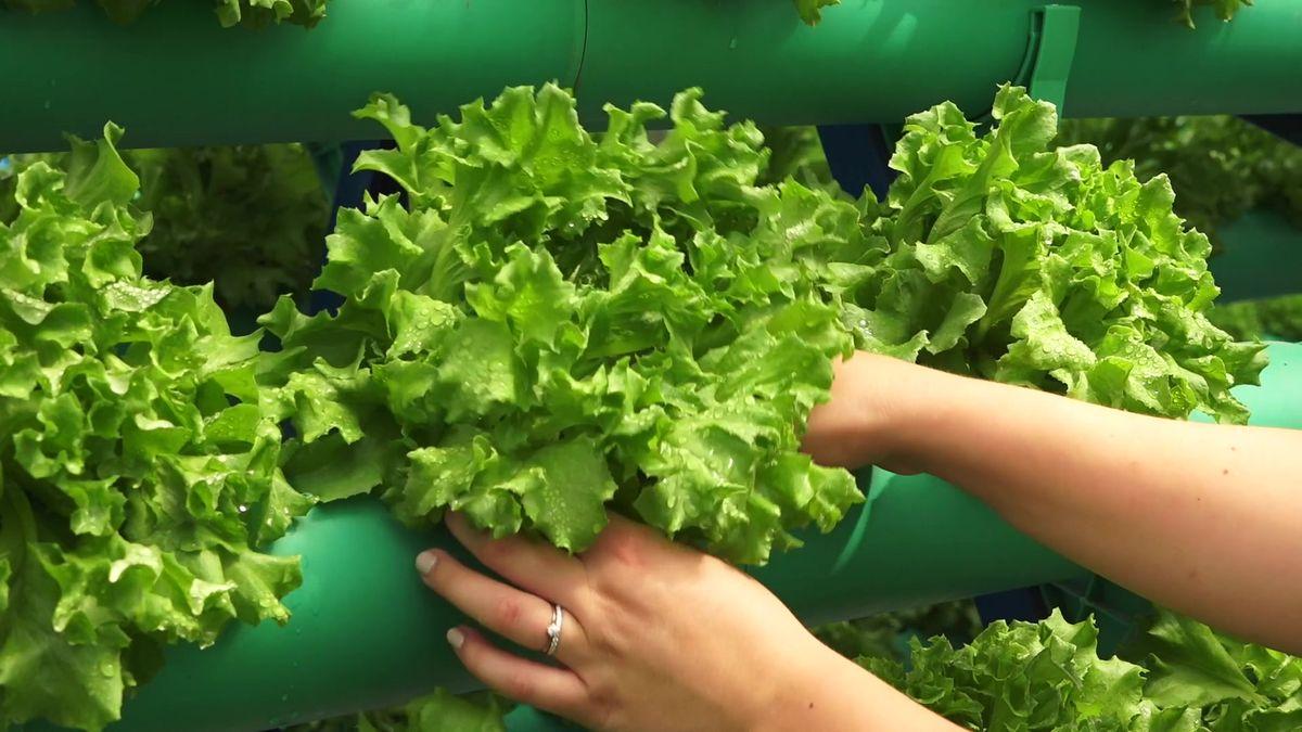 Zelenina vregálech skořeny? Do revoluce se supermarketům nechce