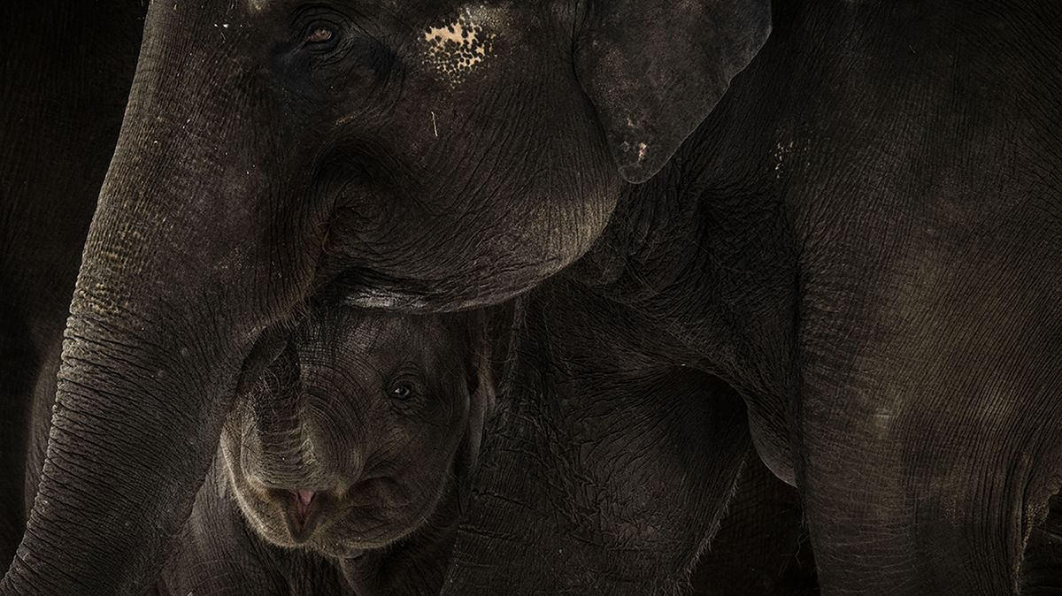 Zvířata vpražské zoo dostala velikonoční nadílku