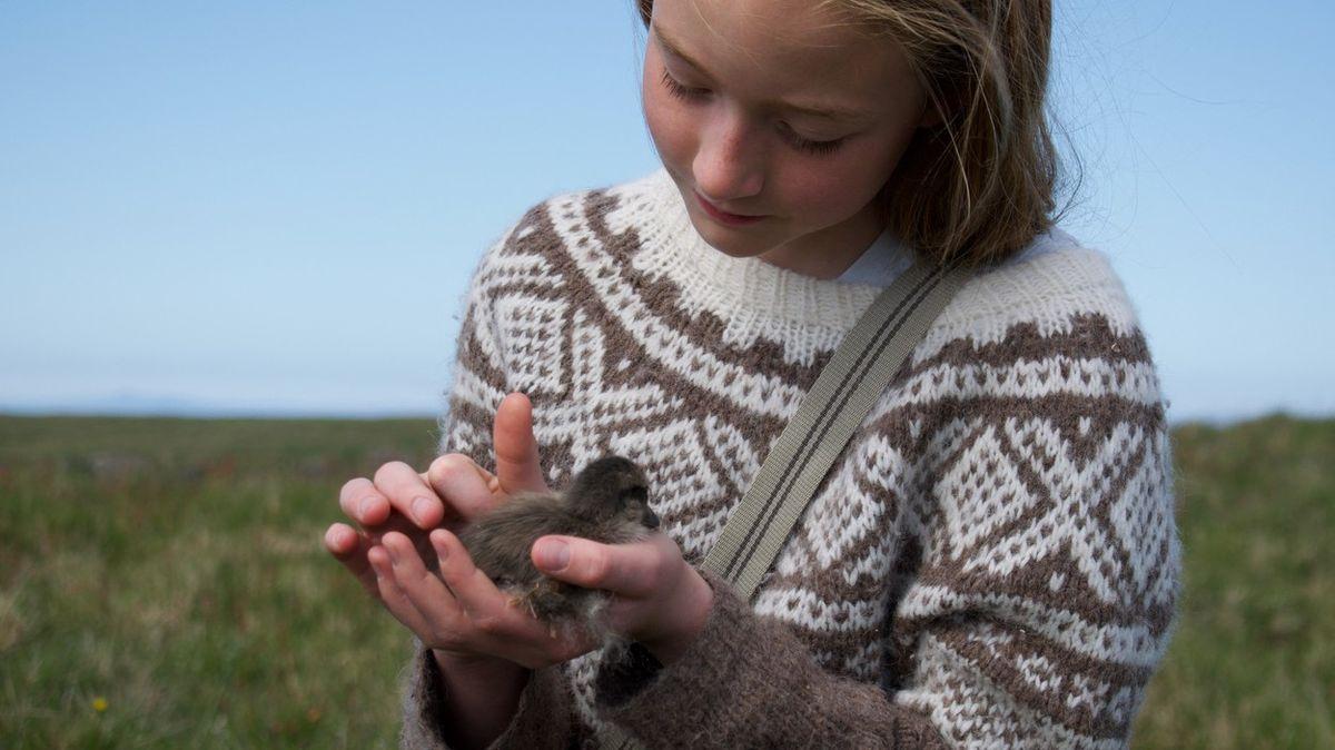 Hnízdí na Islandu a pokrývky zjejího peří patří knejdražším na světě